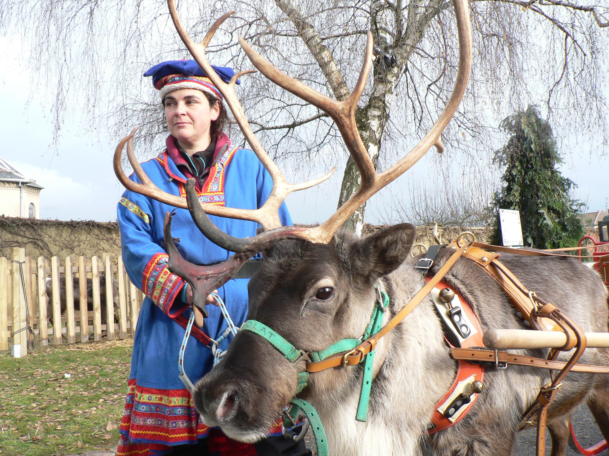 Le Noël des rennes