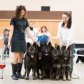 Exposition Nationale d'Elevage de chiens Altdeutsche Schäferhunde