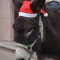 Balade en ânes dans le marché de Noël