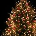 Lancement des festivités de Noël